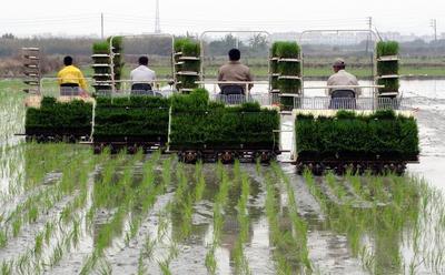 机械化插秧的作业质量对水稻的高产、稳产影响至关重要
